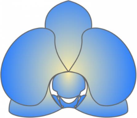 Blue Orchid Logo